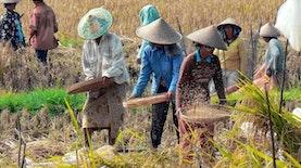 Geliat Tani Indonesia, Salah Satu Perhatian Soekarno Dalam Masa Awal Pembangunan Bangsa