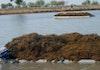 Tahukah Anda Potensi Lain Dari Rumput Laut?