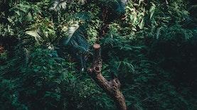 Satwa Misterius Terpantau di Belantara Sulawesi Utara