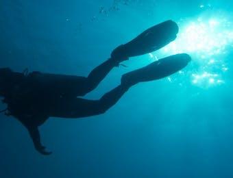 Maratua, Surganya Para Penyelam Dunia