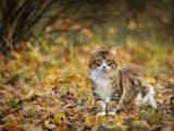 Gambar sampul Jangan Dipelihara! 6 Jenis Kucing Lucu Endemik Indonesia Ini Ternyata Hampir Punah