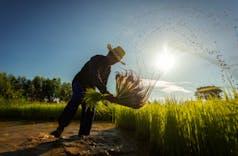 Sektor Pertanian Indonesia Terbukti Kebal Pandemi Covid-19