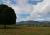 Pohon Mangga Unik Dari Gorontalo