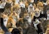 Pulau kecil di barat Sulawesi ini menjadi surga bagi ribuan kucing