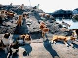 Gambar sampul Pulau-Pulau Bernama Binatang ini juga Banyak Dihuni oleh Binatang tersebut
