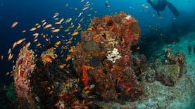 """""""Sophie Rickmers"""" di Pulau Weh, Incaran Penyelam Dunia"""