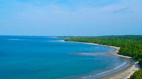 Puluhan Spesies Baru ditemukan LIPI di Pulau Terpencil Barat daya Sumatera