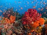 Yuk, Jadi Teman Taman Laut Indonesia lewat aplikasi Handphone!