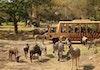 Ngabuburit Tanpa Bosan di Taman Safari Bogor!