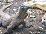 Hewan – hewan Endemik yang Menjadi Ikon Taman Nasional di Indonesia