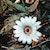 Rhizanthes Deceptor, Bunga dari Famili Rafflesia yang Jarang Dikenal