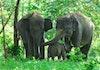 Selamat Datang di Taman Nasional Way Kambas, Bayi Gajah!