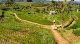 Begini Upaya Konservasi Mencegah Krisis Air di Bali