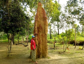 Mahakarya Alam dari Ujung Timur Nusantara