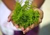 Pemanfaatan Sumberdaya Rumput Laut Melimpah oleh BPPT