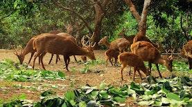 Populasi Atung yang Terancam Punah Bertambah