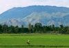 Indonesia Ajari Myanmar Mengolah Sayuran Berdaun