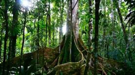 Satwa Asal Tapanuli Ini Masuk 10 Spesies Baru Paling Luar Biasa 2018
