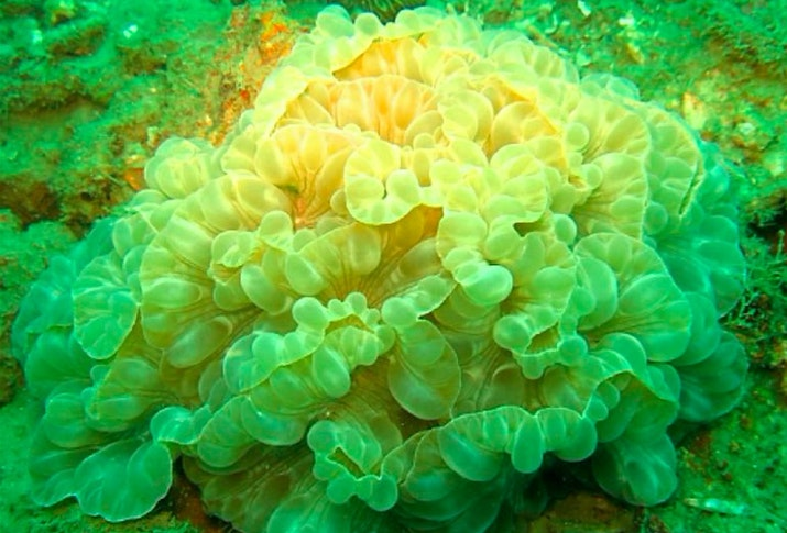 Sains: Belajar Mengenal Karang Hias dan Perairan Tempat Hidupnya