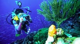 Wow Lokasi Diving Indonesia Jadi Terbaik Dunia Versi Dive Magazine