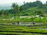 Miliki Jutaan Hektare, Inilah 10 Provinsi dengan Lahan Sawah Terbesar di Indonesia