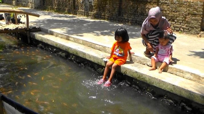 Ribuan Ikan Hidup di Parit di Yogyakarta Ini