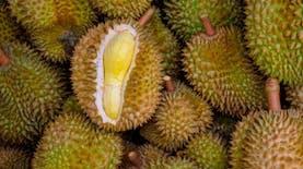 Semarang diserbu Durian, ada apa?