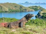 Gambar sampul Sosok di Balik Terpilihnya Pulau Komodo Sebagai Bagian dari 7 Keajaiban Dunia