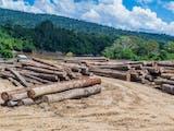 Gambar sampul Deforestasi dan Sampah Plastik yang Dapat Mengganggu Ekosistem Kehidupan Hewan