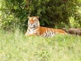 Gambar sampul Cerita Mbah Loreng dan Bentuk Penghormatan Orang Jawa kepada Harimau