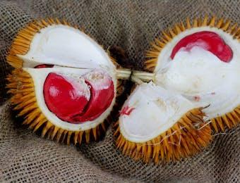 Tren Sepekan: Warna Warni Durian hingga Kepunahan Pesut Mahakam