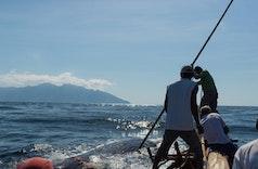 Paledang, Lamafa, dan Cerita Perburuan Paus yang Direstui Greenpeace