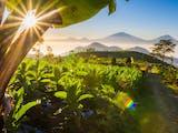 Gambar sampul Ketika Desa Wisata Berperan untuk Menjaga Konservasi Alam dan Budaya