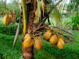 Gambar sampul Nama Kawasan di Jakarta yang Berasal dari Flora Identitas Kota Jogja
