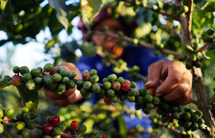 Gambar sampul Perbaikan Ekonomi dan Relasi Gender dalam Sistem Agroferestri Kopi