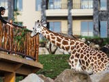 Gambar sampul Wisata Edukasi Sambil Menyapa Satwa di Taman Safari Prigen
