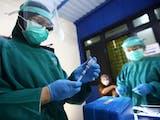 Gambar sampul Peran Mantri Kesehatan Sukseskan Vaksinasi pada Masa Kolonial