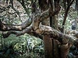Gambar sampul Tahura Pancoran Mas, Saksi Bisu Depok Jadi Hutan Kota Zaman Hindia Belanda