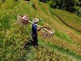 Gambar sampul Kasim Arifin, Jalani KKN 15 Tahun Demi Kembangkan Pertanian di Maluku