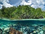 Gambar sampul Upaya Pelestarian Lingkungan Pesisir Pantai Lewat Sekolah Mangrove di Pulau Tawabi