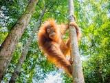 Gambar sampul Peringati Hari Konservasi Alam Nasional 2021, BKSDA Lepasliarkan Sejumlah Hewan Dilindungi