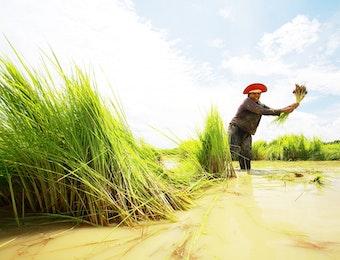 Berkat Ini, Petani di Indonesia Tidak Lagi Perlu Khawatir Saat Alami Gagal Panen