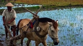 Eksistensi Sistem Pertanian Konvensional Melawan Modernisasi