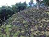 Gambar sampul Mempertanyakan Kembali Kemampuan Masyarakat Prasejarah Indonesia Lewat Situs Gunung Padang