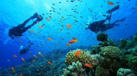 Dua Tempat di Indonesia, World's Best Snorkeling Destinations