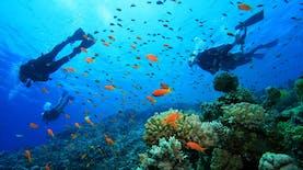 Dua Tempat di Indonesia, World's Best Snorkeling Destinations