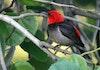 Tahukah Kamu, Jenis Burung Khas Indonesia Bertambah di 2018?