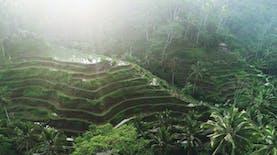 Jadi Lokasi Syuting Dunia, Inilah Pesona Ubud Bali
