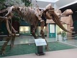 Gambar sampul Lagi, Fosil Gajah Purba Setinggi Atap Rumah Ditemukan di Banjarejo
