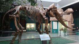 Lagi, Fosil Gajah Purba Setinggi Atap Rumah Ditemukan di Banjarejo